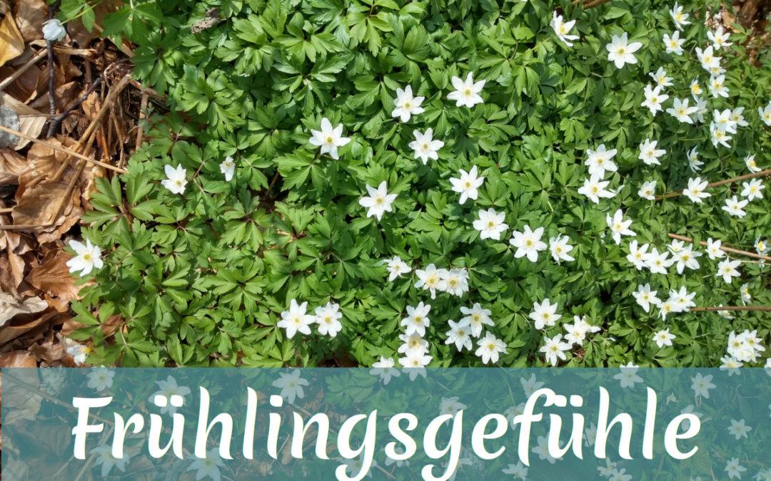 Das Foto zeigt blühende Buschwindröschen. Ein Banner mit der Aufschrift Frühlingsgefühle geht quer über den unteren Bildbereich. Gefühle