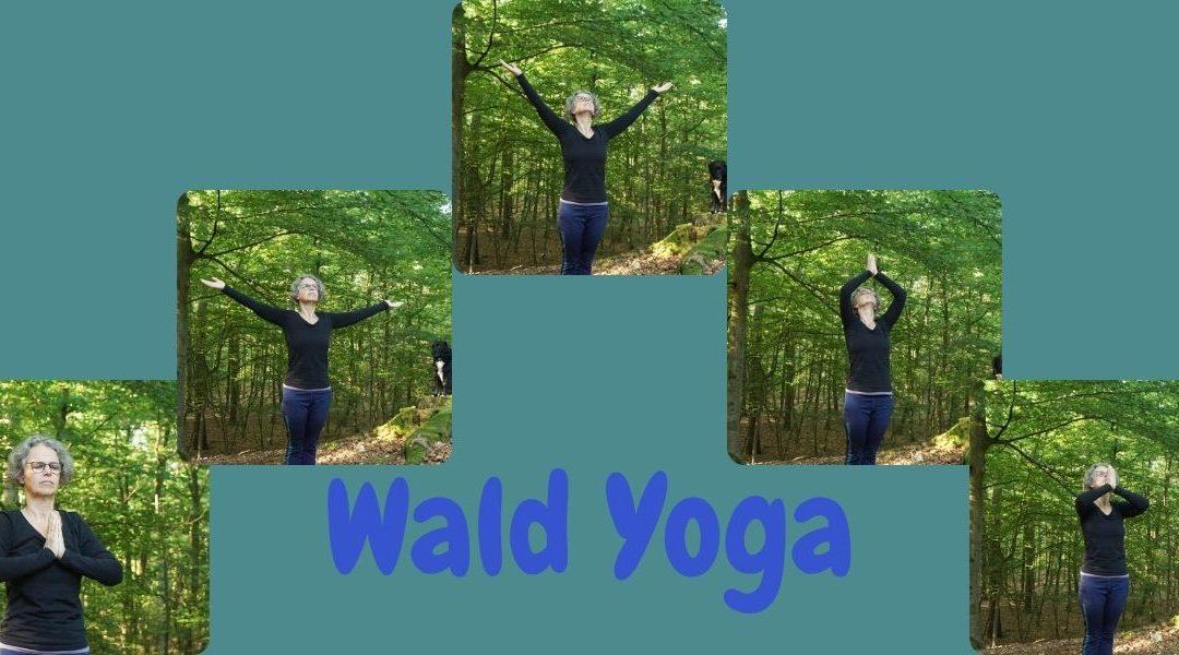 """Das Foto zeigt in 5 Bildern die Yogaabfolge """"Energieatmung"""" Dabei werden die Hände aus dem Anjali Mudra über außen nach oben geführt. Dort werden die Hände gefaltet und so vor das Herz gezogen. Als Text ist Wald Yoga aufgedruckt."""